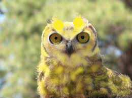 very yellow owl